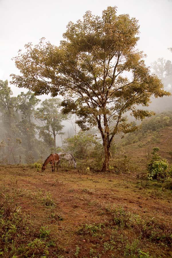 Horse with tree in Piedras Blancas
