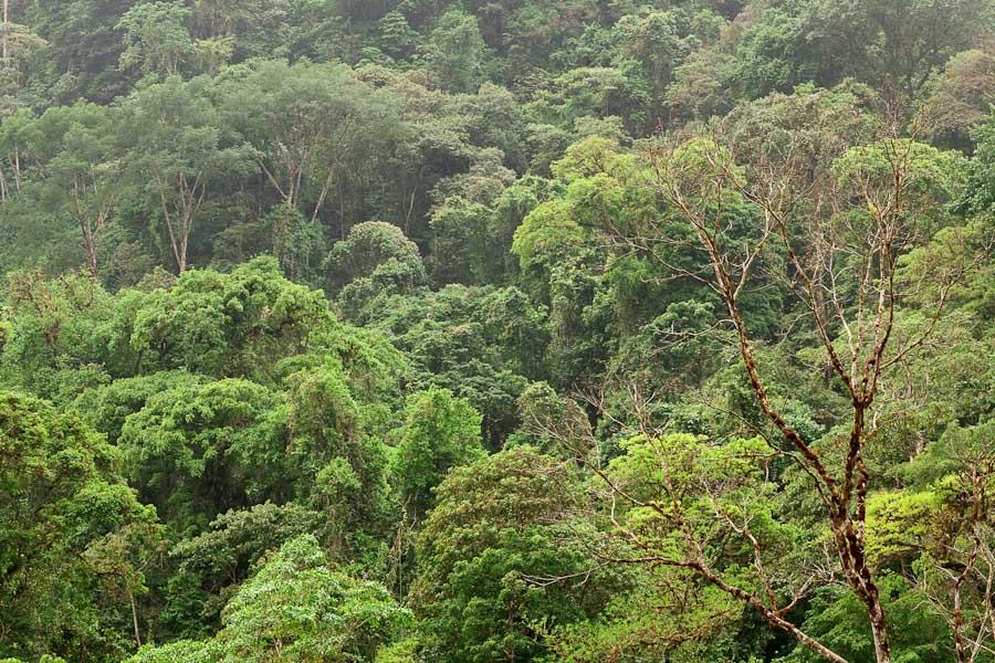 Mountains of Piedras Blancas, Costa Rica.