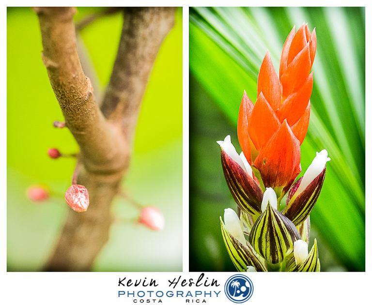 Villa Vanilla Spice Farm Costa Rica