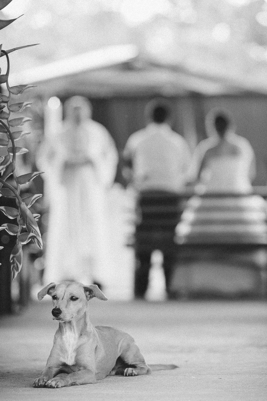 Dog at wedding.
