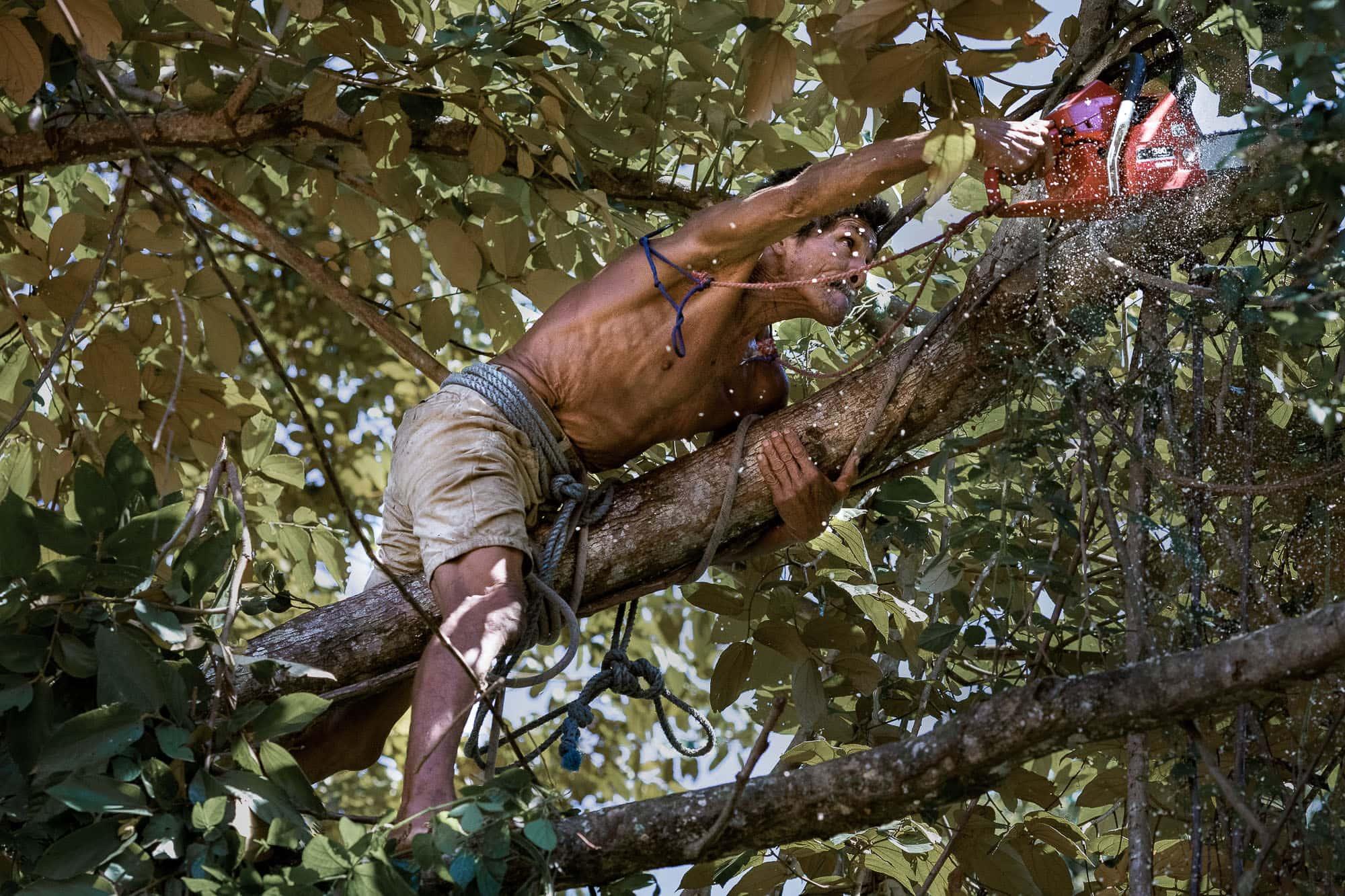man cutting tree in costa rica