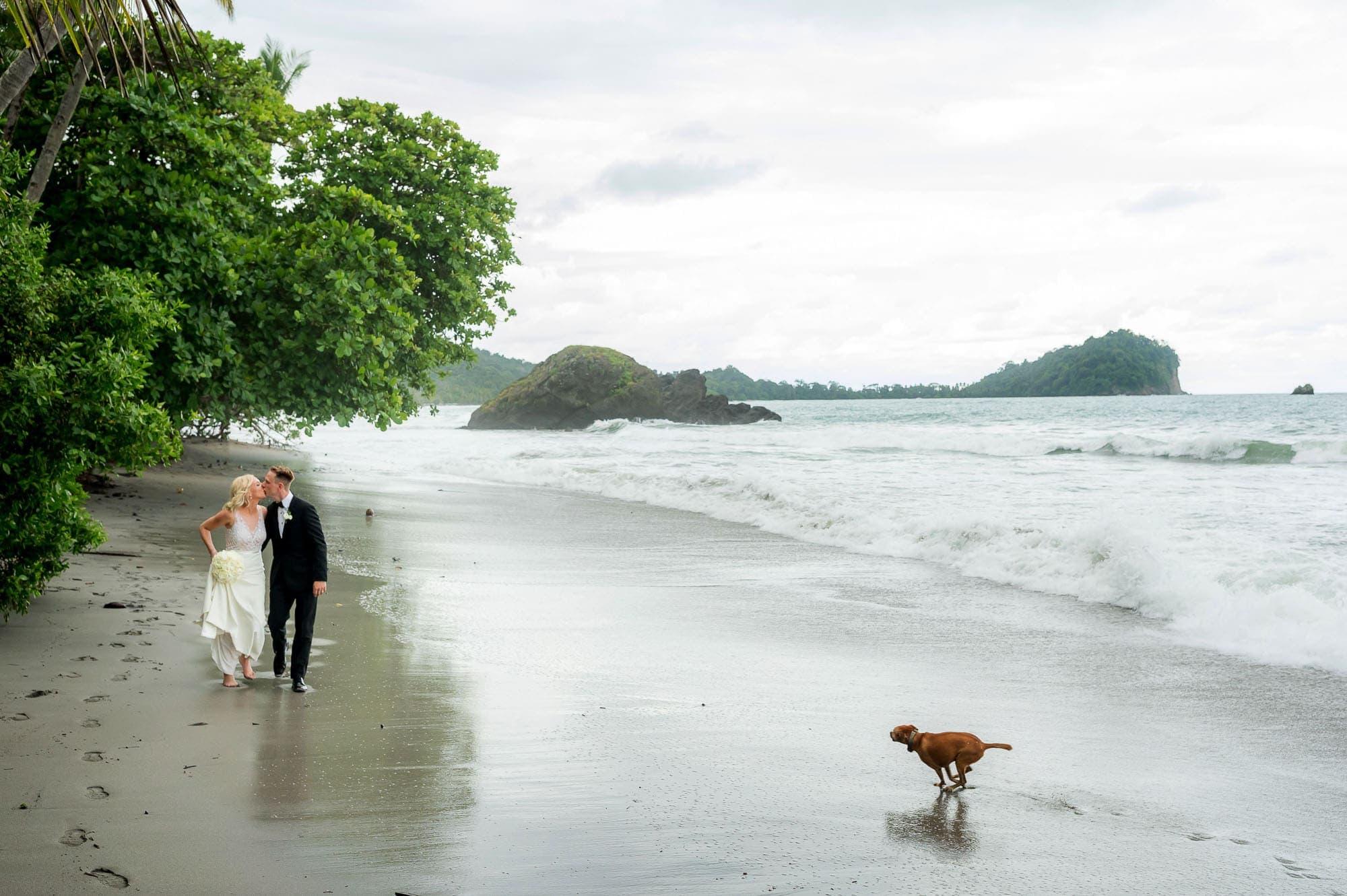 dog at wedding on beach
