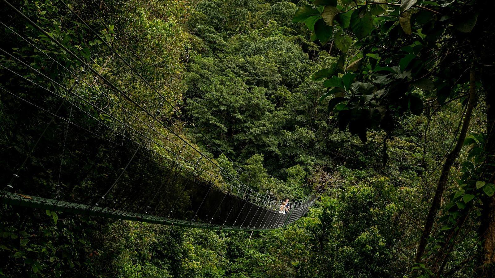 suspension bridge at wedding
