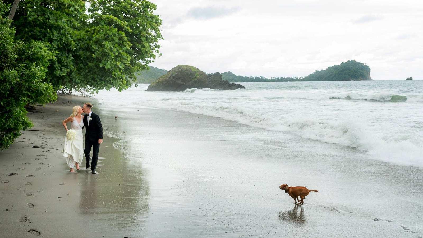 dog at beach wedding