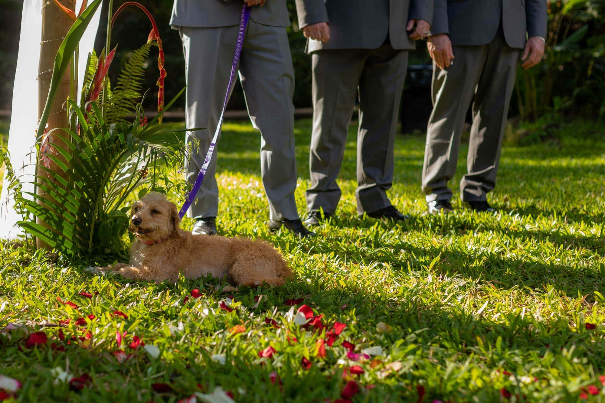 A little furry guest (dog joins the festivities)